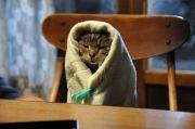 ネコも犬もハムスターも! 可愛すぎると話題の「 #キャベツ巻き」まとめ